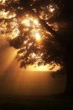Rays of Sunlight Burst from Behind a Silhouetted Tree in a Park Photographic Print by Robbie George