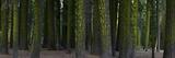 A Dense Redwood Forest Fotografisk tryk af Raul Touzon