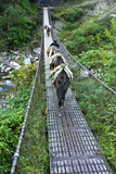 A Villager Crosses a Suspension Bridge Between Mountains with His Pack Mule Train Photographic Print by Jason Edwards