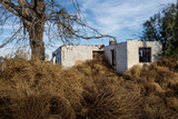 Tumbleweeds Take Root Near an Abandoned House Photographic Print by Diane Cook Len Jenshel