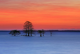 Sunrise over Lake Mattamuskeet and Cypress Trees Photographic Print by Robbie George