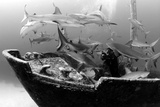 An Underwater Photographer Explores a Shipwreck as Caribbean Reef Sharks Circle Nearby Photographic Print by Jennifer Hayes