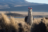 A Portrait of a Large Llama in Sajama National Park, Bolivia Photographic Print by Alex Saberi