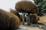 A Crew Removes Tumbleweeds from a Slope in East Los Angeles Photographic Print by Diane Cook Len Jenshel