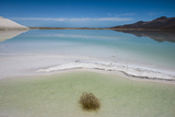 A Lone Tumbleweed in a Water Filled Salt Flat Photographic Print by Diane Cook Len Jenshel