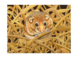 Edible Dormouse, 1993 Giclee Print by  Ditz