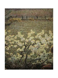Meadow with Flowers, 1900-1903 Giclee Print by Giuseppe Pelizza da volpedo