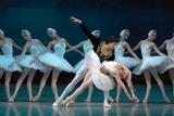 Maria Alexandrova, of the Bolshoi Ballet, as Odette in 'Swan Lake' Fotografisk tryk