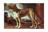 Portrait of a Dog Giclee Print by Guglielmo Ciardi