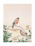 Winter Scene with Chaffinch and Holly Giclee Print by Henry Fuseli