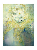 Anemone Japonica - White Queen and Molu Giclee Print by Karen Armitage