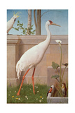 Indian Crane, Cockatoo, Bullfinch and Thrush Giclee Print by Herbert Hofer