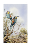 Bee-Eaters Giclee Print by Carl Donner
