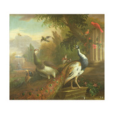 Peacock and Peahen with a Red Cardinal in a Classical Landscape Giclee Print by Tommaso Masaccio