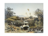 View of the Umnonoti River in Natal Giclee Print by George Hemming Mason