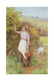 Picking Blossom Giclee Print by William Affleck