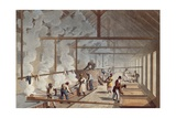 Rum Distillery in the West Indies,1823 Giclee Print by William Collins