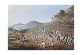 Working in the Field in Antigua, Lesser Antilles, 1823 Giclee Print by William Clark