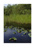 United States, Everglades National Park, Florida Giclee Print