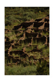 United States. Bandelier National Monument, Tyuonyi, Pueblo Indian Settlement Giclee Print