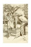 Rural Beekeeping in the Early Twentieth Century Giclee Print