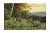 Hirsche, Junge Rehkitze Und Hirsche Am Waldesrand Giclee Print