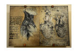 Cardiovascular System Leonardo Da Vinci's Drawing Giclee Print
