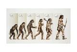 Hominid Evolution Through Time - Giclee Baskı