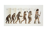Hominid Evolution Through Time Giclee Print