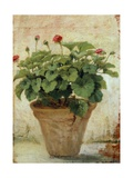 Vase with Geranium Giclee Print by Gioacchino Toma