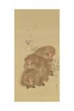 Baboon Family Giclee Print