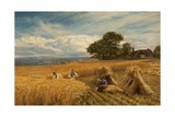 A Surrey Cornfield, 1864 Giclee Print by George Vicat Cole