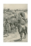 A Camel-Caravan, Western Australia Giclee Print by Walter Stanley Paget