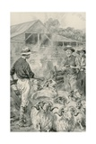 A Sheep Station on Canterbury Plains Giclee Print by Frank Dadd