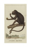 Red-Handed Howler Giclee Print by Jean Gabriel Pretre