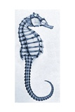 X-Ray of a Seahorse Giclée-tryk