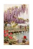 A Paeony Garden Giclee Print by Ella Du Cane