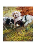 Setters Giclee Print by Edmund Henry Osthaus