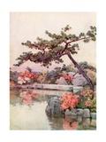 Azaleas in a Kyoto Garden Giclee Print by Ella Du Cane