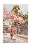 The Drooping Cherry Giclee Print by Ella Du Cane