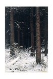 Spruce Forest in Winter, 1884 Giclee Print by Ivan Ivanovitch Shishkin