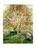 Trees in Bloom at Eragny, 1895 Reproduction procédé giclée par Camille Pissarro