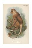 The Proboscis Monkey Giclee Print