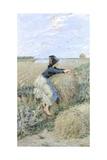 Wheatgrass in Tombolo, 1894 Giclee Print by Niccolo Cannicci