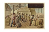 Packing Sacks of Cocoa in a Factory Giclee Print