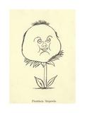 Phattfacia Stupenda Giclee Print by Edward Lear
