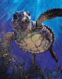 Stephen Fishwick - Kemps Ridley - Poster
