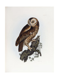 Tawny Owl, 1841 Giclee Print by Prideaux John Selby