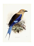 Bluebellied Roller, 1893 Giclee Print by Johan Gerard Keulemans