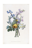 Narcissi, Rosa, Hyacynth, 1805 Giclee Print by Jean-Louis Prevost